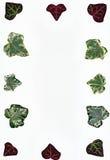 Ivy leaf border Royalty Free Stock Image
