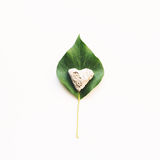 Ivy Leaf And Stone Heart On White Background Stock Image