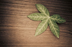 ivy leaf on wood background Stock Photos