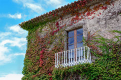 Ivy leaves and balcony Stock Photography