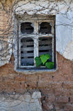 Ivy leaves growing through broken window Royalty Free Stock Photography