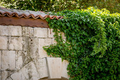 Ivy leaves on old stone wall with tiled roof Royalty Free Stock Images