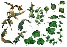 Ivy leaves ornament. Hand drawing watercolor green Ivy leaves ornament Stock Images