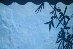 Ivy Leaves Shadows auf einer blauen Wand Stockfoto