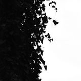Ivy leaves silhouette Stock Images
