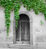 Ivy leaves surrounding an old door in selective desaturation Royalty Free Stock Photography