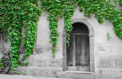 Ivy leaves surrounding an old door in selective desaturation Royalty Free Stock Photos
