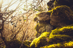 Ivy and moss covering dry stone wall Royalty Free Stock Image