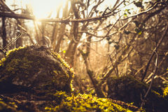 Ivy and moss covering dry stone wall Royalty Free Stock Photos