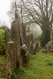 Ivy and moss on tombstones Royalty Free Stock Image