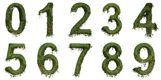 Ivy Numbers Royalty Free Stock Photos