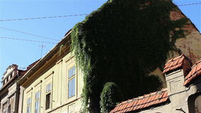 Ivy on Old House Walls stock video