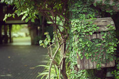 Ivy on old wooden letter box. Stock Photography