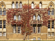 Free Ivy On Christ Church College Royalty Free Stock Photography - 28227387