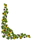 Ivy and Pansies Floral Border Royalty Free Stock Photography