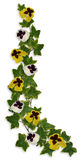 Ivy and Pansies Floral Border Royalty Free Stock Photo