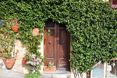 Ivy plant around wooden green gate. stock photos