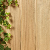 An Ivy plant on a table of hardwood Royalty Free Stock Image