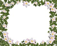 Ivy and Plumeria Floral Border invitation Stock Photo