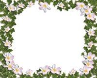 Ivy and Plumeria Floral Border invitation Stock Photo