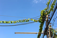 Ivy on power lines Stock Image