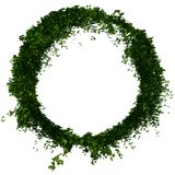 Ivy ring or circle foliage Stock Image