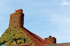 Ivy roof Stock Photography