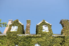 Ivy roof top Royalty Free Stock Image