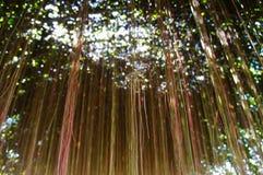 Ivy root Stock Photo