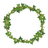 Ivy round frame Royalty Free Stock Image