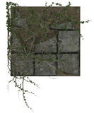 Ivy runners covering old stone tiles Royalty Free Stock Image