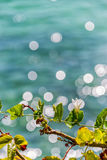 Ivy sea. Top gourd climbing the tree by the sea Royalty Free Stock Images
