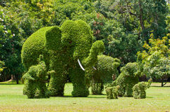 Ivy in the shape of elephants Royalty Free Stock Photography