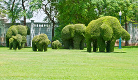 Ivy in the shape of elephants Stock Photography