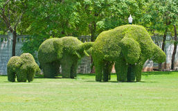 Ivy in the shape of elephants Royalty Free Stock Images