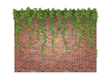 Ivy shoots on the brick wall. Hanging down ivy shoots on the brick wall background vector illustration