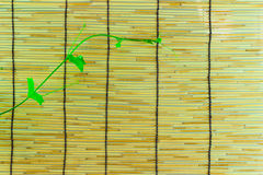 Ivy shoots on  Japanese bamboo blind Royalty Free Stock Photography