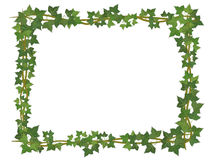 Ivy square frame. Square decorative frame of ivy branches Stock Photos
