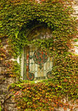 Ivy and stained glass window. Close-up of a stained glass window of a castle surrounded with ivy Stock Images