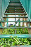 Ivy Stairs. Old Wooden Stairs with Beautiful Ivy Slowly Growing Underneath Royalty Free Stock Images
