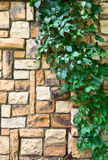 Ivy on the stone wall Royalty Free Stock Photo