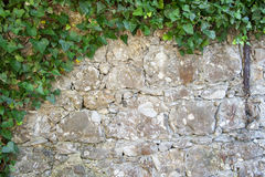 Ivy on a stone wall Royalty Free Stock Image