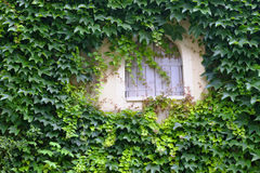 Ivy surrounded window in Provence Royalty Free Stock Image