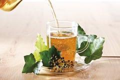 Ivy Tea (Hedera helix) Stock Image