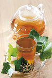 Ivy Tea (Hedera helix) Stock Images