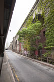 Ivy and tree in lower manhattan under road towards brooklyn brid Stock Photo