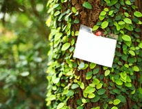 Ivy on tree with white card Stock Photo