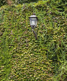 Ivy and urban lantern Stock Photography