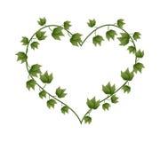 Ivy Vine i en härlig hjärta Shape Royaltyfri Fotografi