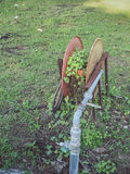 Ivy vines heart-shaped  on the old steel hose reel. Stock Photo